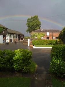 cattery_rainbow